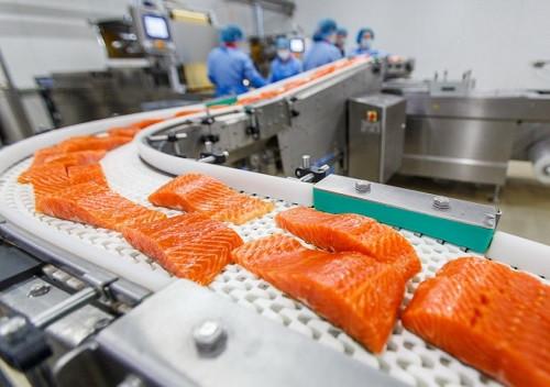 proizvodstvo-rybnyh-konservov11