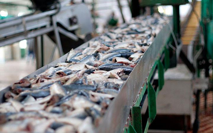 proizvodstvo-rybnyh-konservov2
