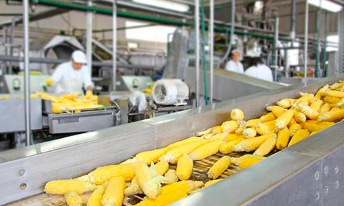 linii-pererabotki-i-konservacii-kukuruzy
